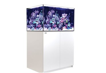 REEFER™ XL - 300 - White