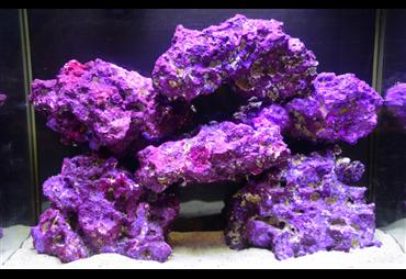 Caribic purple corals stones 18,14kg