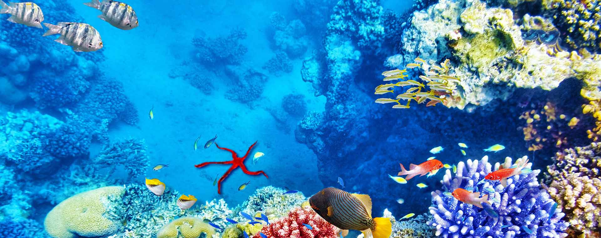 Mořské akvárium Mořský útes